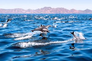 EXCITE - Ausflug zur Wal- und Delfinbeobachtung  (TAXI BOAT)