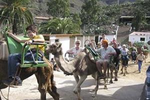 Jeep und Kamel-Safari