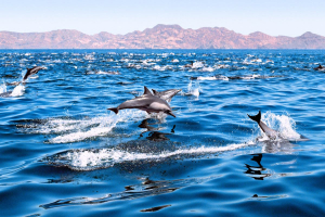 EXCITE - Excursion of Dolphin &  Whale watching (TAXI BOAT)