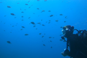 Discover Scuba Diving (Try Dives)- PUERTO RICO DIVING